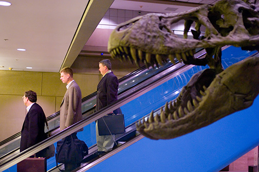 Travelers pass a Tyrannosaurus Rex display at Pittsburgh International Airport advertising the Carnegie Museum of Natural History. © Kevin Moloney, 2007.